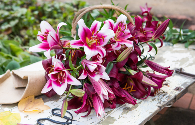 Lily lovers the ultimate guide to growing lilies tesselaar you can then cut your lily stem to around 5cm and the lilium bulb will become dormant mightylinksfo